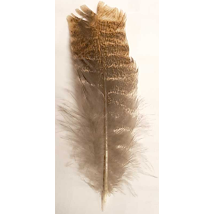 Barred Wing Smudging Feather 12