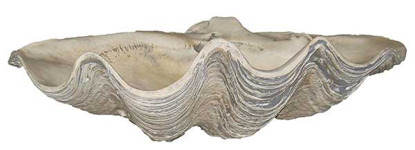 Large Clam Shell <BR> 7H x 22.5W x 13D