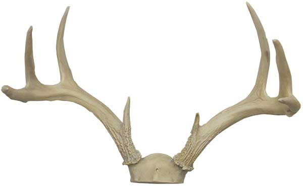 Antlers <BR> 11L x 17W x 9.5D