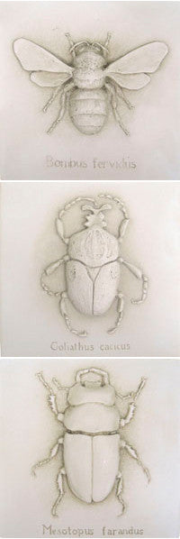 Bee and Beetles(Goliath and Meso ) set of 3 plaques