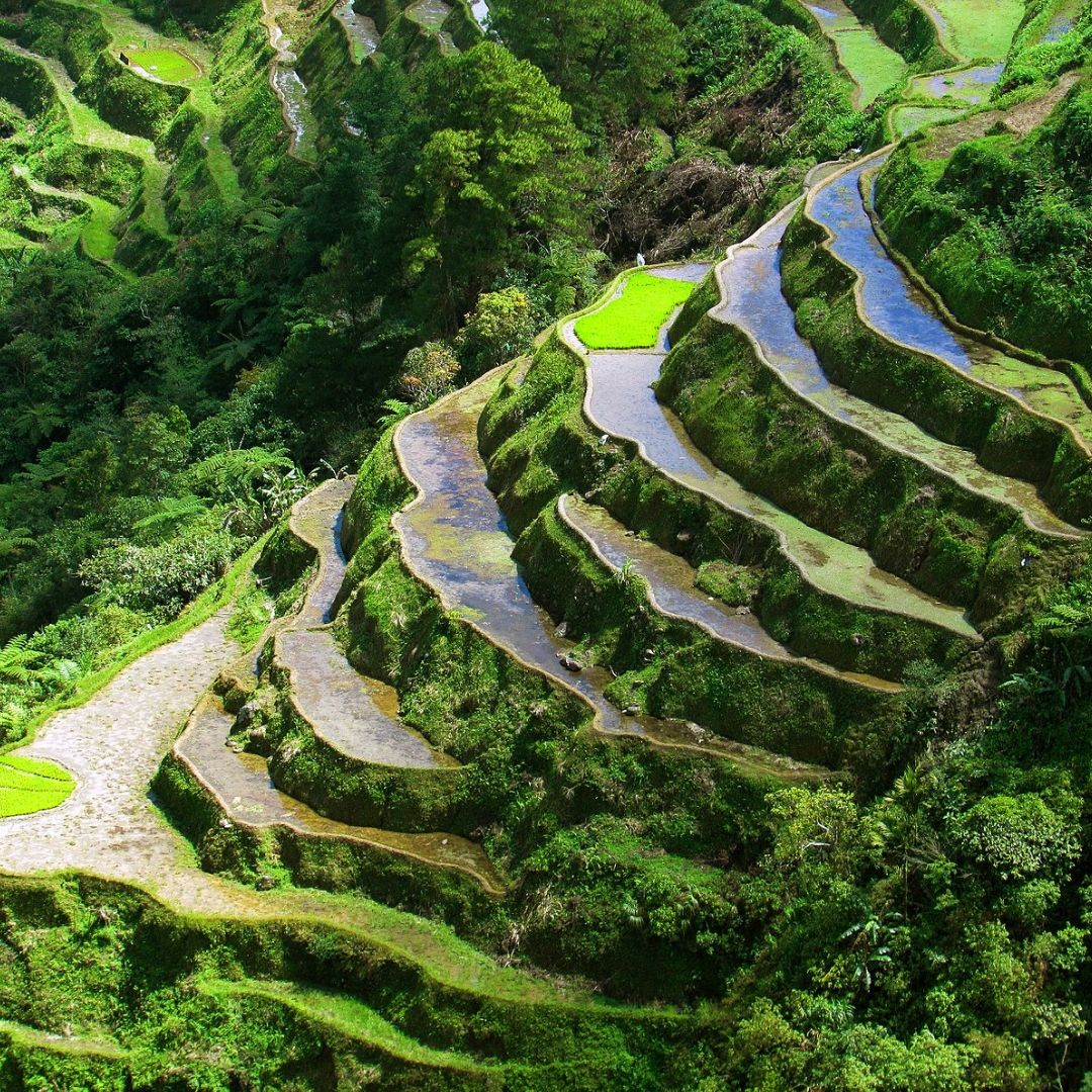 Save The Ifugao Rice Terraces In The Philippines