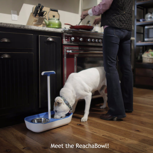 Reachabowl, The Pain Free Pet Bowl