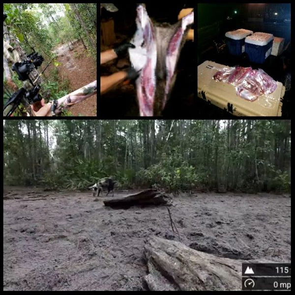 Bacon tonight! Nothing better than a cool afternoon of hog hunting.