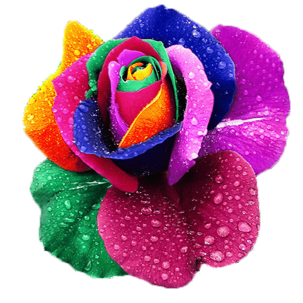 150 Rainbow Rose Seeds-Rama Deals