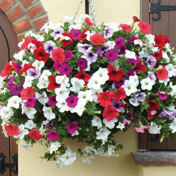 Hanging Petunia Mixed Seeds-Rama Deals