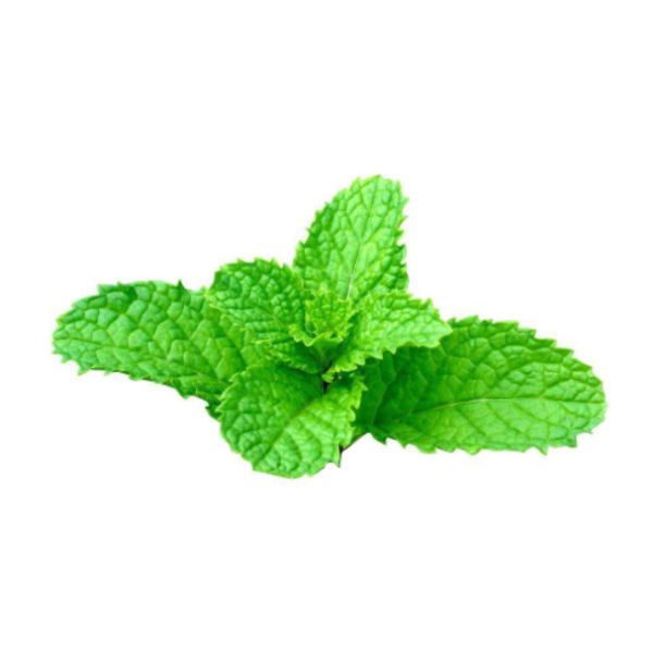 30 Mentha Seeds (Non-GMO) - Best Plant To Treat Bronchitis-Rama Deals