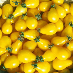Tomato Seeds (100pcs/pack)