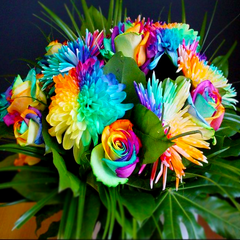 50 Rainbow Rose and Chrysanthemum Flower Seeds