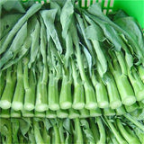 220 Seeds Chinese Kale Seeds-Rama Deals