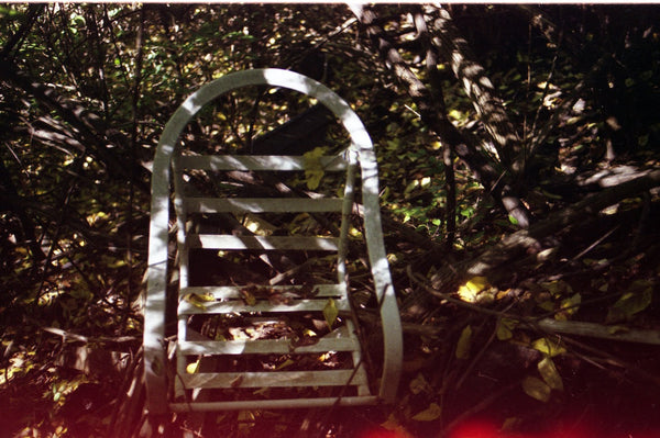 chair in leaves with light leaks at bottom