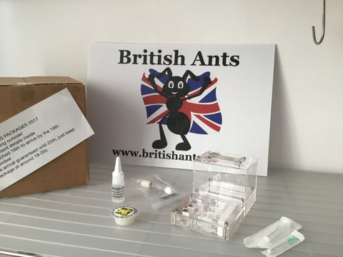Complete kit with free Lasius colony (contains Hydration Needle) (Dispatch 16th December)