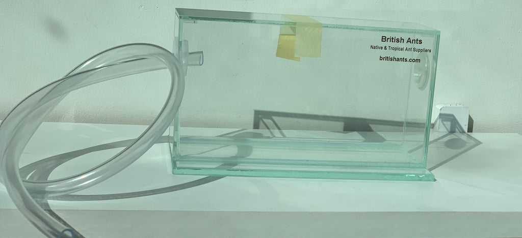 Glass formicarium