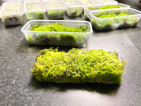 Container of live moss (Cheapest UK supplier guaranteed)