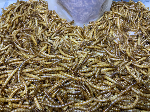 Dried Meal Worms 300ml (NEW-Sept Special)