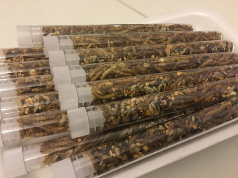 Tube of Seed and Triple protein mix (Large)