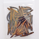 Super Worms - Hermit Crab Food - Organic - Hermit Crab - Pet Food - Hermie's Kitchen