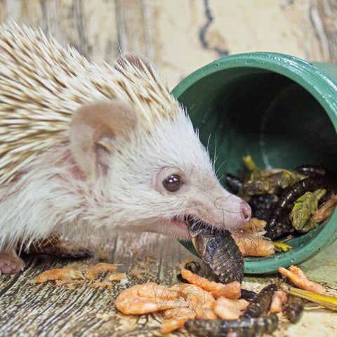 Meal Topper 2 │ Hedgehog