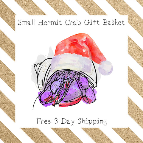 Small Hermit Crab Gift Basket │ Free 3 Day Shipping