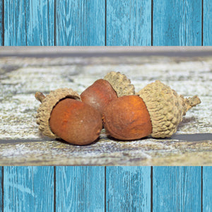 Acorns - Hermit Crab Food - Organic - Hermit Crab - Pet Food - Hermie's Kitchen