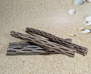 Small Cholla Cactus Wood │ Pet