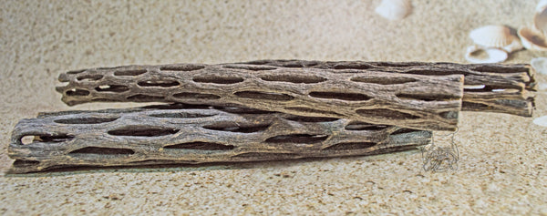 Large Cholla Cactus Wood │ Pet