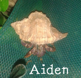 Aiden's Apples - Hermit Crab Food - Organic - Hermit Crab - Pet Food - Hermie's Kitchen