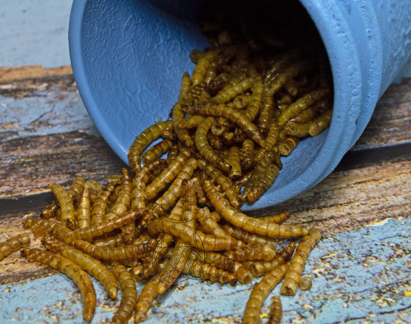 Mealworms | Hermit Crab
