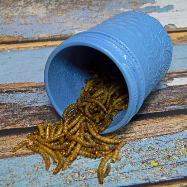 Mealworms | Hermit Crab Food