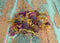 Sunshine Garden Mix - Hermit Crab Food - Organic - Hermit Crab - Pet Food - Hermie's Kitchen