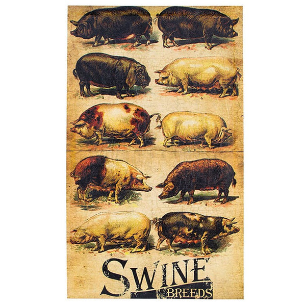 #72925 Swine Breeds Canvas