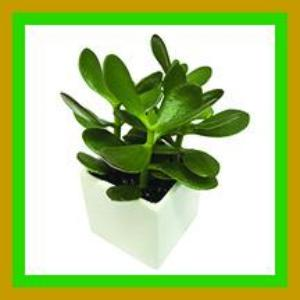 Plants That Make a Healthier Enviroment - Feng Shui Free Download - Sandra Jeffs