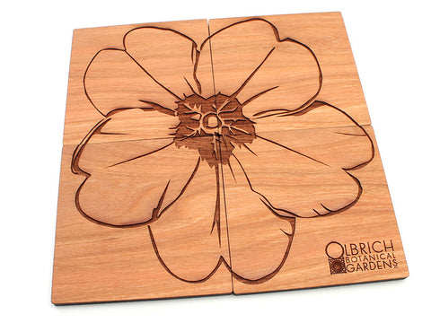 Olbrich Gardens Evening Primrose Flower Coasters