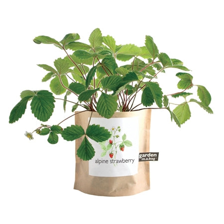 Alpine Strawberry Garden in a Bag