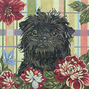 Affenpinscher (Monkey Dog)