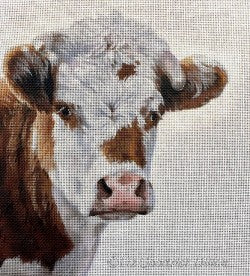 Moo, Guernsey cow portrait