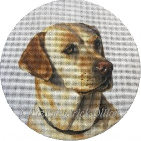 Yellow Labrador, portrait