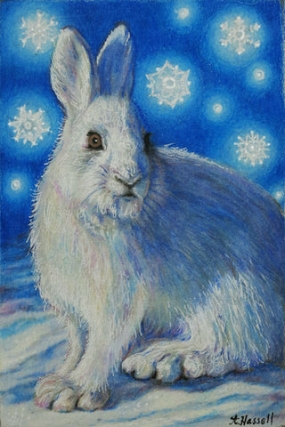 SNOW HARE by artist Annette Hassell