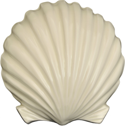 Wall Scallop - Large