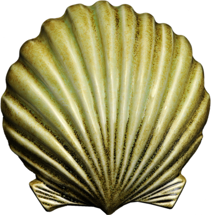 Wall Scallop - Large - gonepottynz