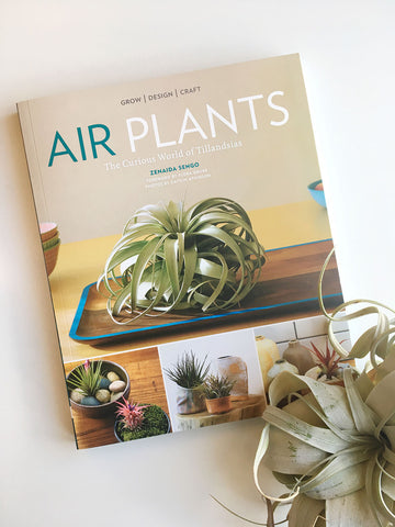 Air Plants: The Curious World of Tillandsia