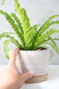 Speckled White Ceramic Planter Pot