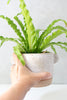 Speckled White Ceramic Planter Pot - Gather Goods Co - Raleigh, NC