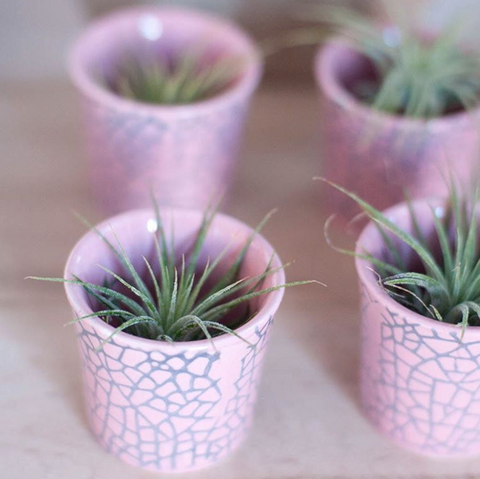 Air Plant in Tiny Pink Cup - Gather Goods Co - Raleigh, NC