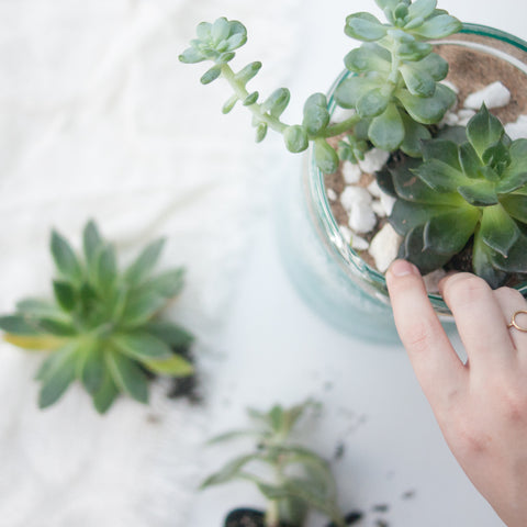 DIY Succulent Terrarium<br>Thursday, May 19th<br>6:30-8:30pm - Gather Goods Co - Raleigh, NC