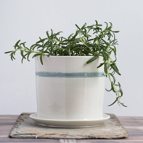 Striped Porcelain Planter