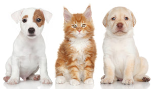 Are your pets affected by toxic chemicals?
