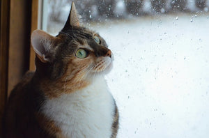 Rainy days with pets in and out of your home