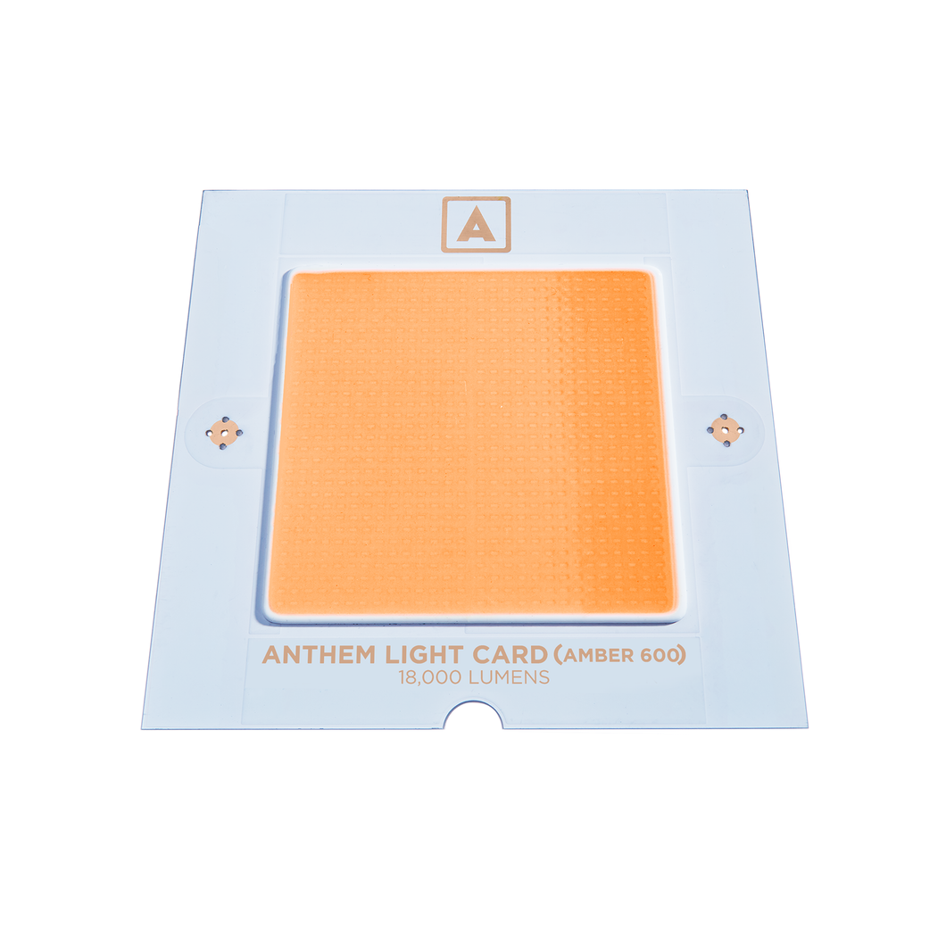 Anthem Light Card (Amber 600)