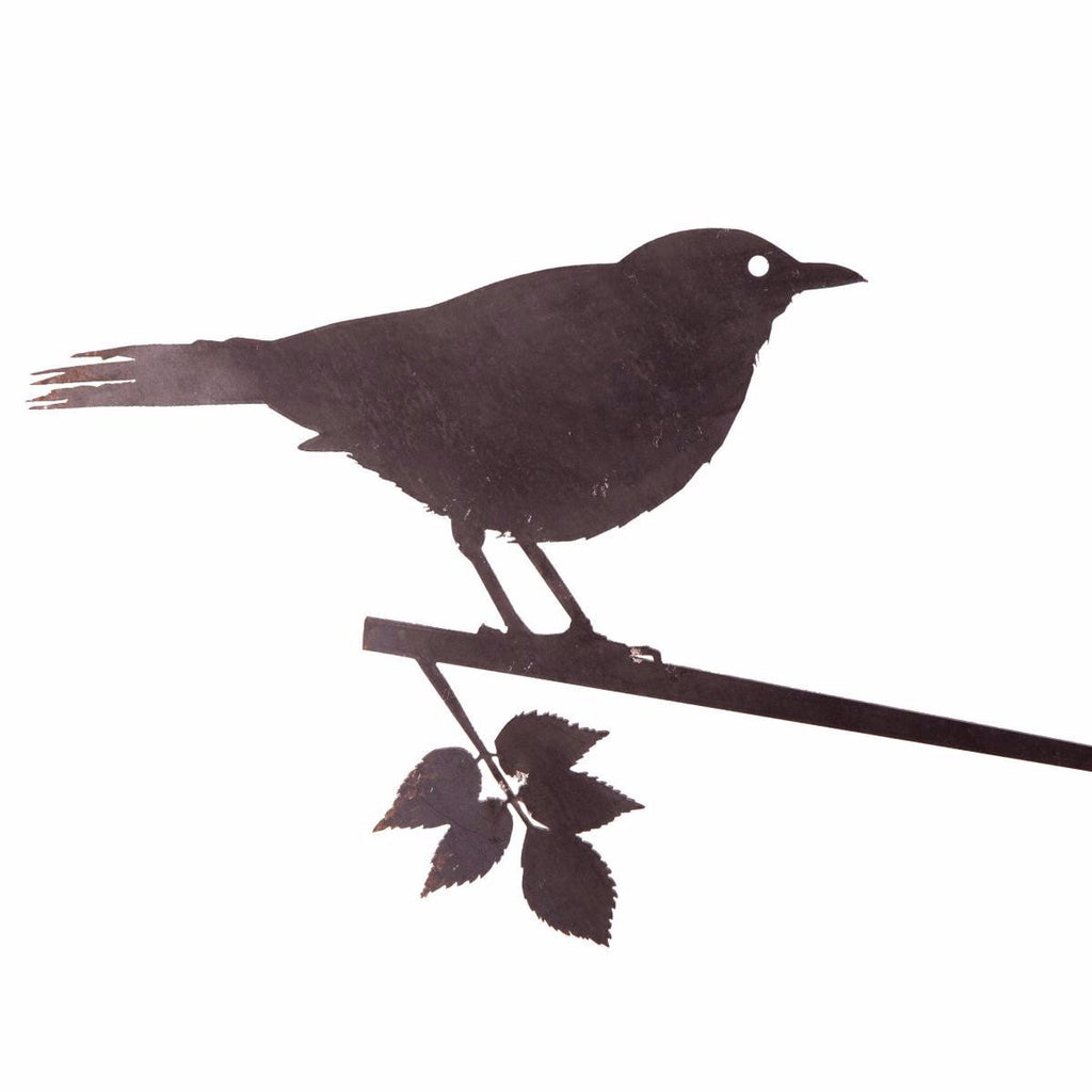 Currawong / Metalbird