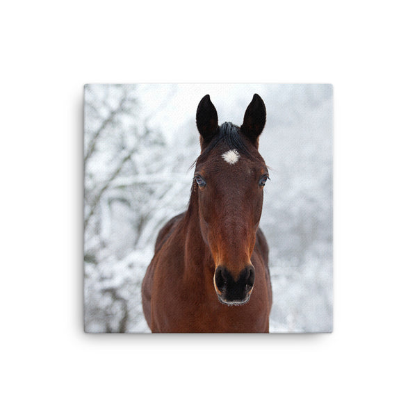 Winter Horse Wall Canvas